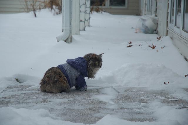 kedi-modasi-7